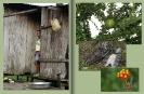Amazonien 34 35