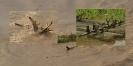 Holzig Amazonas 2